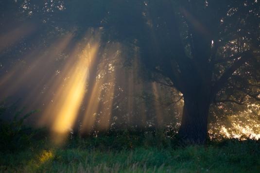 valonsateet_pieni